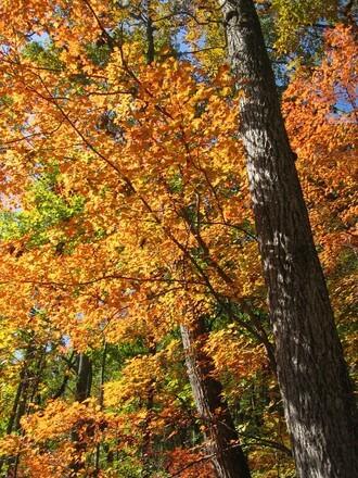 Trees Dance Their Homage To Ingmar >> Lovisa Forfattare Pa Scensverige Page 2 Of 8